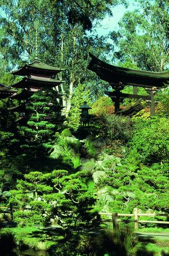 Japanese tea garden in golden gate park 7 of 66 for Japanese garden room